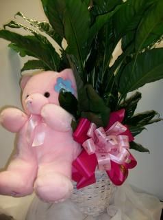 Plant Assortment with Baby Plush Keepsake
