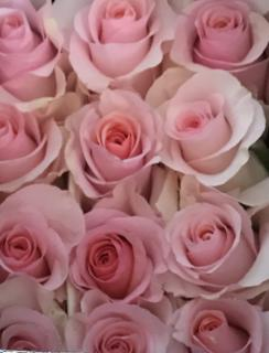 Farm Direct Wholesale Flowers and Bulk Flowers