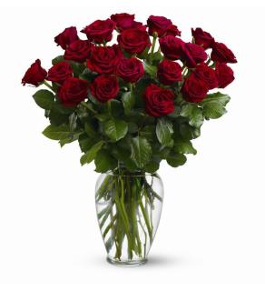 Two Dozen Red Roses No Gyp